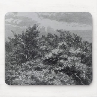 Charles Waterton s Grave Mouse Pads