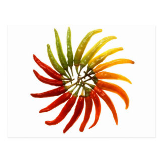 Charleston Hot Peppers Color Wheel Postcard