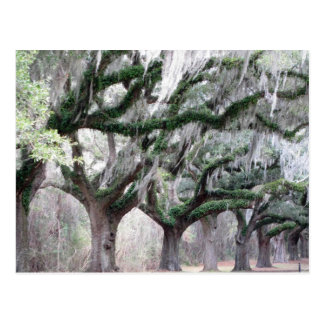 Charleston Oaks Postcards