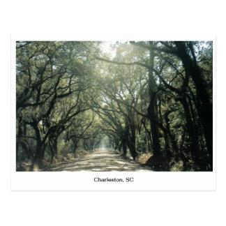 Charleston, SC Oak Trees Postcard