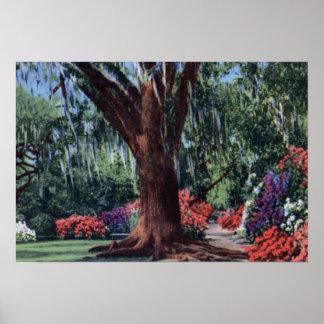 Charleston South Carolina Magnolia Azaleas Print