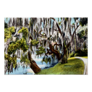 Charleston South Carolina Magnolia Garden Poster