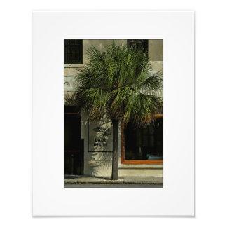 Charleston Street with Palmetto Tree Photo