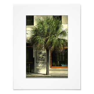 Charleston Street with Palmetto Tree Art Photo
