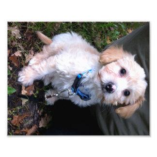 Charley at 8 weeks. photo print