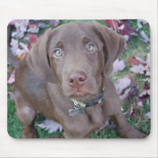 Charley: Autumn Leaves Mousepad