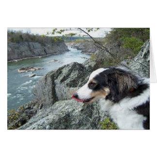 """Charlie at Great Falls""~Border Collie Photo Card"