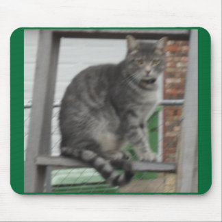 Charlie our tabby cat mouse pad