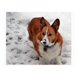 Charlie Snow Snout Postcard