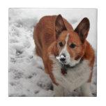 Charlie Snow Snout Tile