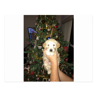 Charlie The GoldenDoodle Puppy on Christmas Postcard