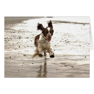 Charlie The Springer Card