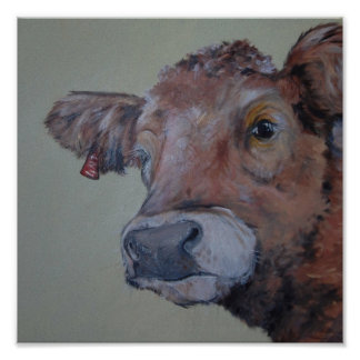 Charlois highlander cow takes a peek poster