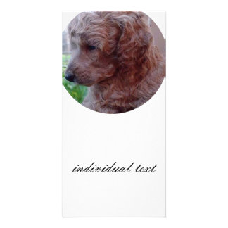 Charly,poodle baby photo cards