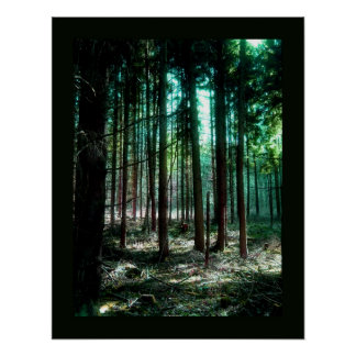 Charm forest poster
