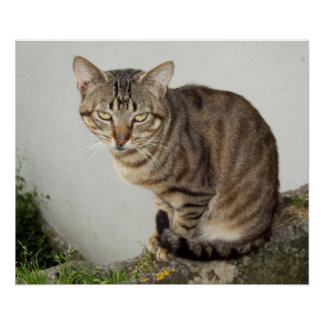 Charming cat    Poster