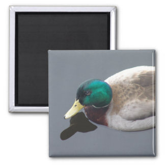 Charming Duck Magnet