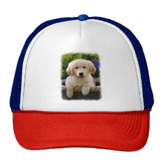Charming Goldie Retriever Dog Puppy Photo - cap