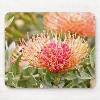 Charming Pincushion Protea Mouse Pad