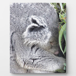 Charming Sleeping Australian Koala Plaque