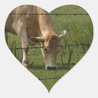 Charolais acobardan el pasto en campo pegatina en forma de corazón