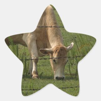 Charolais acobardan el pasto en campo pegatina en forma de estrella