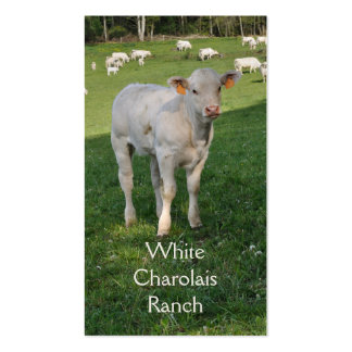 Charolais beef cattle with calf Double-Sided standard business cards (Pack of 100)