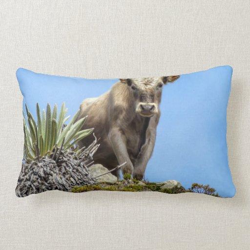 Charolais Bull Almohada