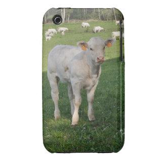 Charolais calf iPhone 3 cover