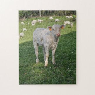 Charolais calf jigsaw puzzles