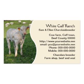 Charolais calf with cream panel business card