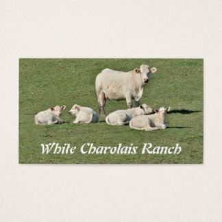 Charolais cow and four calves business card