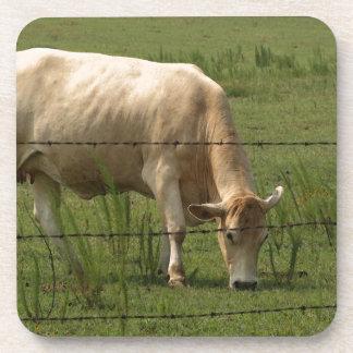 Charolais Cow Grazing in Field Beverage Coaster