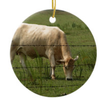 Charolais Cow Grazing in Field Ceramic Ornament