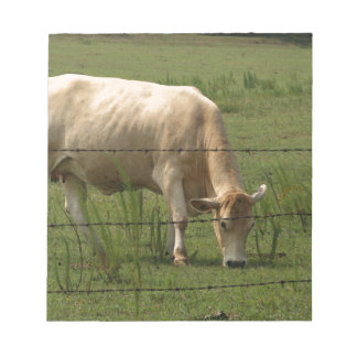 Charolais Cow Grazing in Field Note Pad