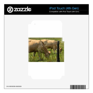 Charolais Cow Grazing iPod Touch 4G Decals