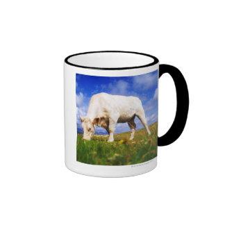 Charolais Cow Grazing, Mannin Bay, Ireland Ringer Mug