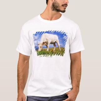 Charolais Cow Grazing, Mannin Bay, Ireland T-Shirt