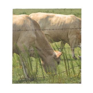 Charolais Cow Grazing Notepad