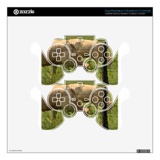 Charolais Cow Grazing PS3 Controller Skins