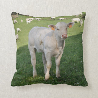 Charolais white calf photo cushion