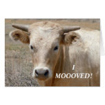 Charolais White Cow - Western Change of Address Stationery Note Card