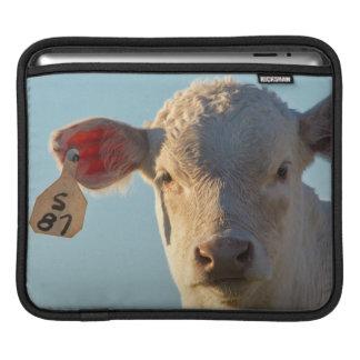 Charolaise Beef Calf Near Augusta, Montana, USA iPad Sleeves