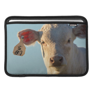 Charolaise Beef Calf Near Augusta, Montana, USA MacBook Air Sleeve