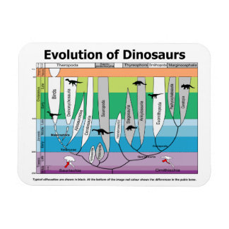 Chart of the Evolution of Dinosaurs Magnet