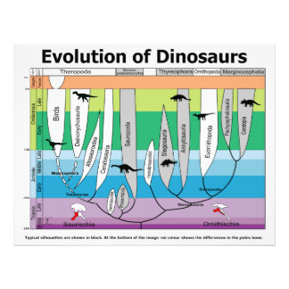 Chart of the Evolution of Dinosaurs Photo Print