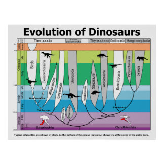 Chart of the Evolution of Dinosaurs Poster