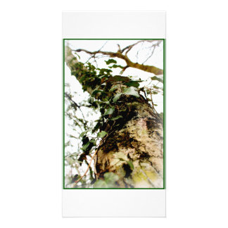 chart photo white rooks natural tree trunk ivy card