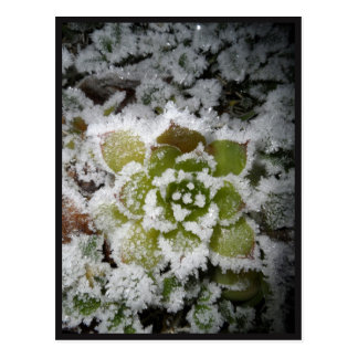 chart tallies black nature winter snows cactée postcard