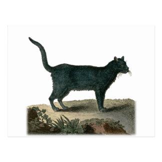 Chartreux Cat Postcard